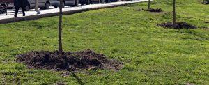 Santa Eugenia celebrará el Día del árbol con 47 nuevos ejemplares