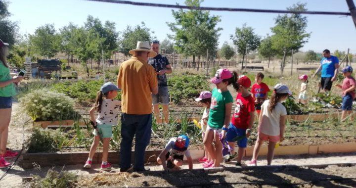 Colaboración con colegios en la Huerta Eugenia