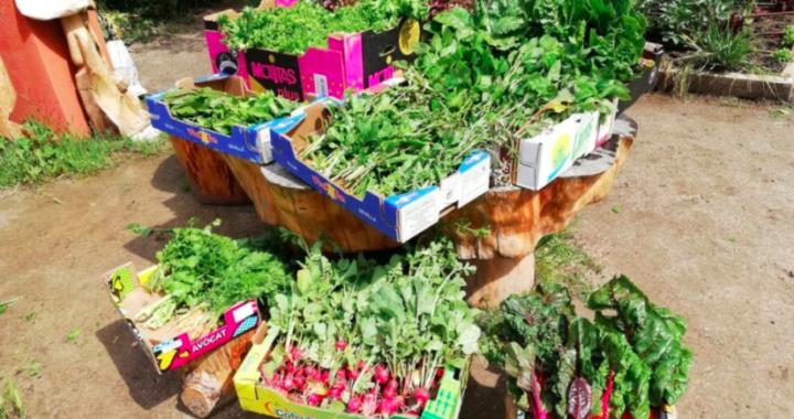Los huertos urbanos comunitarios de Madrid donan sus cosechas a colectivos vulnerables