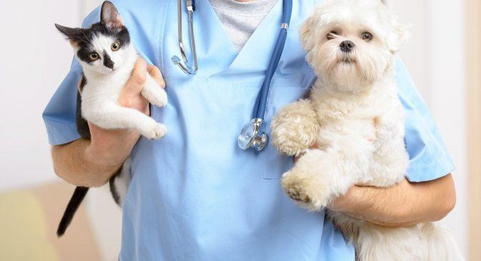 Clínica Veterinaria San Bernardo informa sobre el plan de vacunas de tu mascota